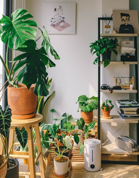 house plants for stress relief | Stress relief activities that are scientifically proven, stress relief activities at home